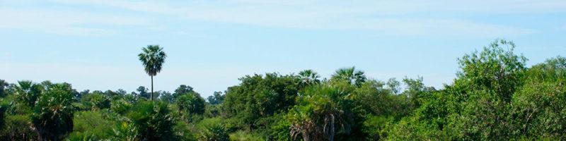 Llamados a consultarías para proyectos financiados por el FVC