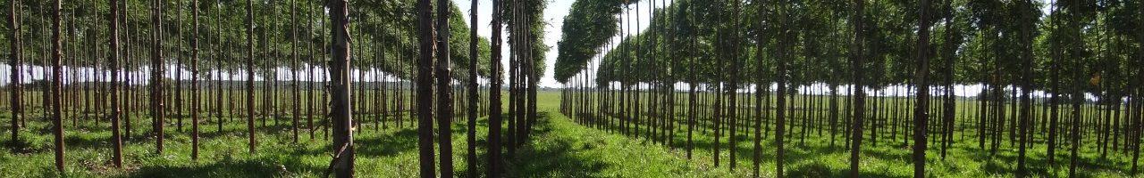 PROEZA: Invitan a presentar oferta para la implementación de seis modelos de sistemas agroforestales